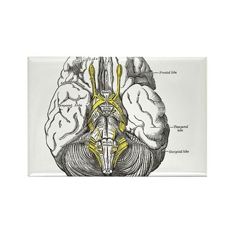 Brain Rectangle Magnet
