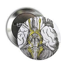 "Brain 2.25"" Button (100 pack)"
