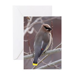 Wax Wing Greeting Card