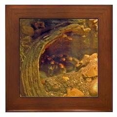 redknee tarantula Framed Tile