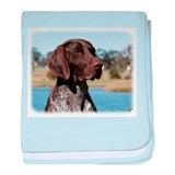 German shorthaired pointer Cotton