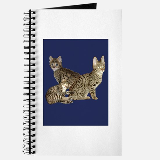 savannah kittens Journal