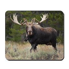 Moose Mania Mousepad