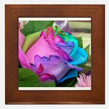 Framed Tile - Unique Multi-Colored Rose