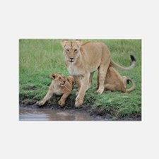 Lioness with Cubs Rectangle Magnet