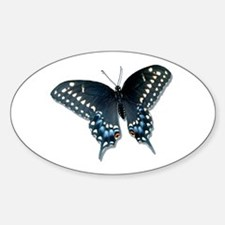 Black Swallowtail butterfly Oval Decal