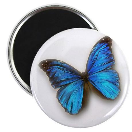 Blue Morpho Magnet