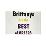 Brittany Best of Breeds Rectangle Magnet (10 pack)