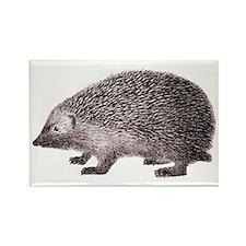 Hedgehog Antique Engraving Rectangle Magnet