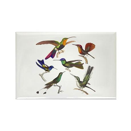 Six Pretty Hummingbirds Rectangle Magnet