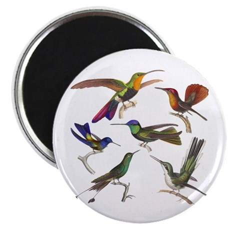 "Six Pretty Hummingbirds 2.25"" Magnet (10 pack"