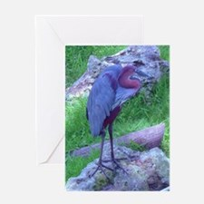 goliath heron Greeting Card