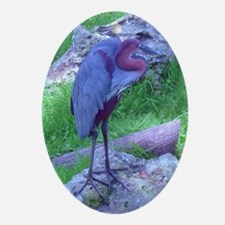 goliath heron Ornament (Oval)