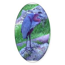 goliath heron Decal