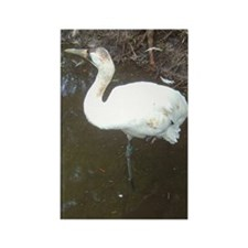 whooping crane 2 Rectangle Magnet (100 pack)