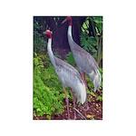 cranes Rectangle Magnet (10 pack)