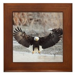 Eagles Landing Framed Tile