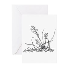 Dandelion Greeting Cards (Pk of 10)
