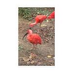ibis Sticker (Rectangle 10 pk)
