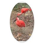 ibis Sticker (Oval 50 pk)