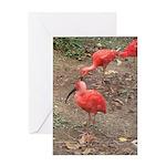 ibis Greeting Card