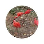 ibis 3.5