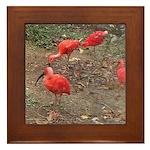 ibis Framed Tile