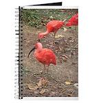 ibis Journal