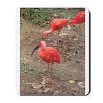 ibis Mousepad