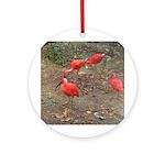 ibis Ornament (Round)