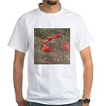 ibis White T-Shirt
