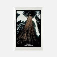 Sequoia National Park Tree Rectangle Magnet