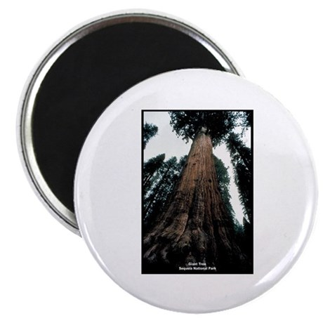 Sequoia National Park Tree Magnet