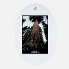 Sequoia National Park Tree Oval Ornament