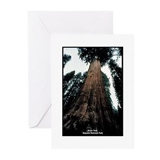 Sequoia National Park Tree Greeting Cards (Package