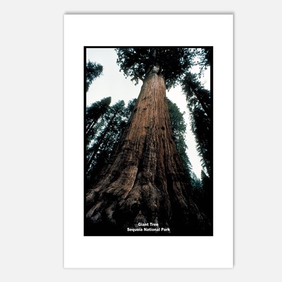 Sequoia National Park Tree Postcards (Package of 8