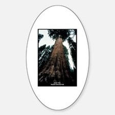 Sequoia National Park Tree Oval Decal