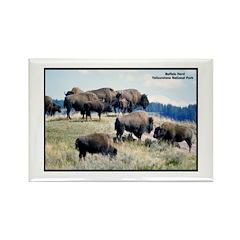 Yellowstone Buffalo Herd Rectangle Magnet (10 pack