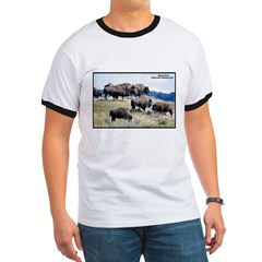 Yellowstone Buffalo Herd (Front) T
