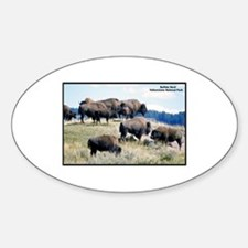 Yellowstone Buffalo Herd Oval Decal