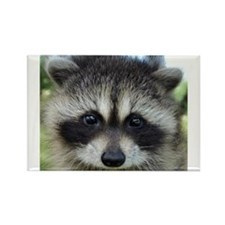 Unique Raccoon Rectangle Magnet (10 pack)