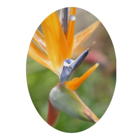 Bird of Paradise Ornament (Oval)