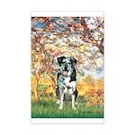 Spring / Catahoula Leopard Dog Mini Poster Print