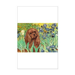 Irises & Ruby Cavalier Posters