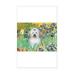 Irises / Coton Posters