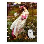 Windflowers / Eskimo Spitz #1 Small Poster
