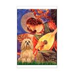 Mandolin / Lhasa Apso #9 Mini Poster Print