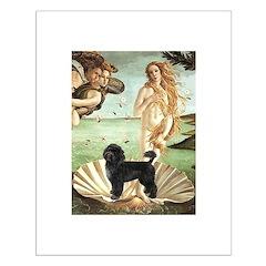 Venus / PWD (#2) Posters
