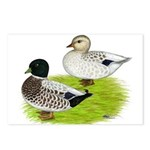 Snowy Call Ducks Postcards (Package of 8)