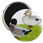 Snowy Call Ducks Magnet